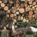 【キャンプの基本】薪の知識、使い方について